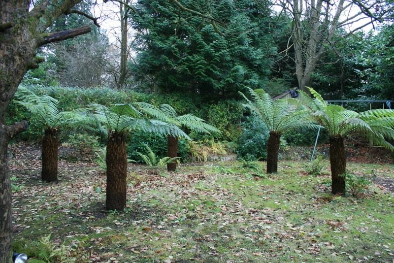 Garden 015 killen landscapes garden design bournemouth for Garden design bournemouth